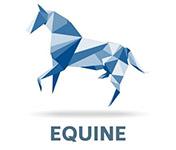 equine-5-