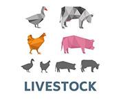 livestock-4-